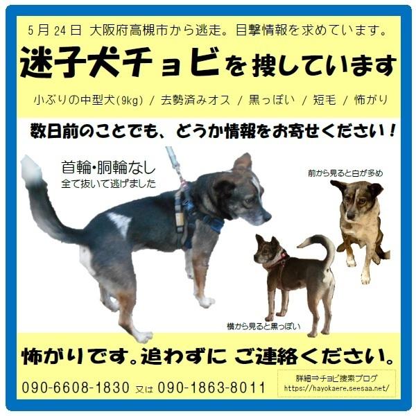迷子犬 チョビ を捜しています 〜高槻市→〜